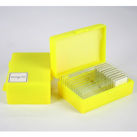 Zoology 3 Slide Kit - MA805